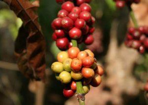 solo-coffee1-4